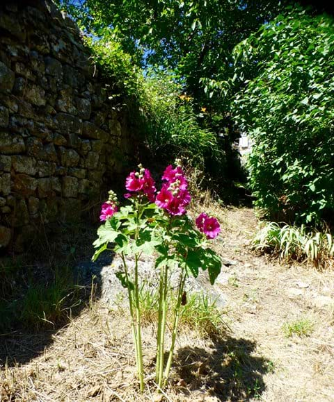 Holiday cevennes wildlife gite flora flowers