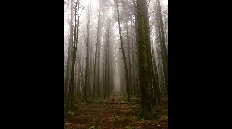 Misty walk through Chibannagh plantation