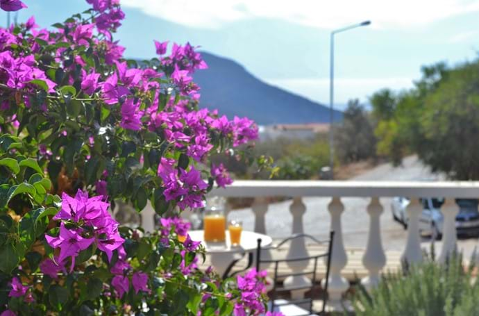 Bougainvillea adds to the atmosphere