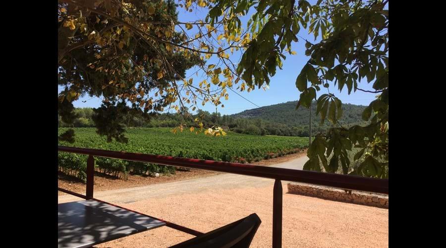 Sainte Croix La Manuelle vineyard (they use our grapes!)