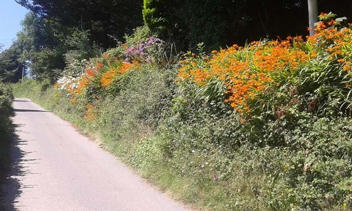 Beautiful flowers frame the private driveway down to Nutcombe Cottages