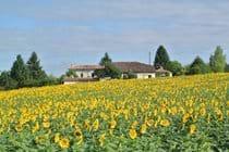 Chez Sarrazin farm - summer 2015