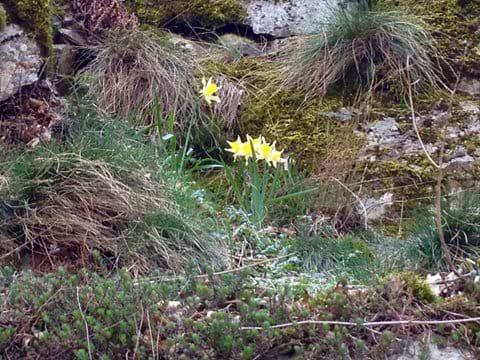 Holiday cevennes wildlife gite flora flowers
