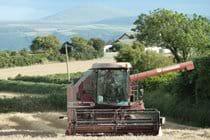 Harvest time at Smeale Farm.