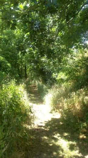 Shady woodland walk