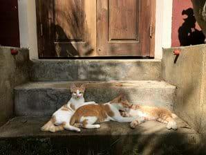 De drie huiskatten