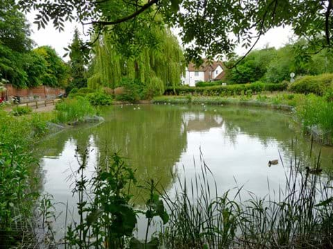 Swan Meadow Pond in in June 2012