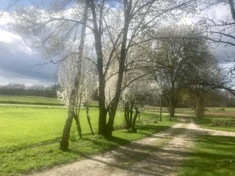Our chemin lined with flowering fruit trees in the Spring