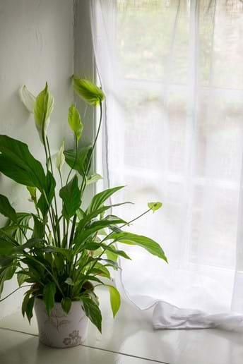 A plant with white flowers stands on a wide white windowsill in a Devon Holiday COttage bathroom