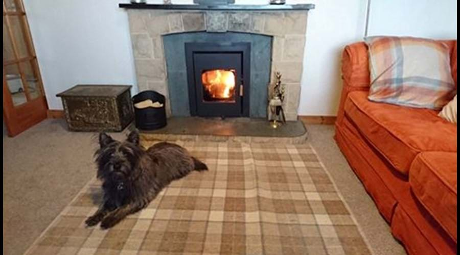 Cairn terrier in front of the fire