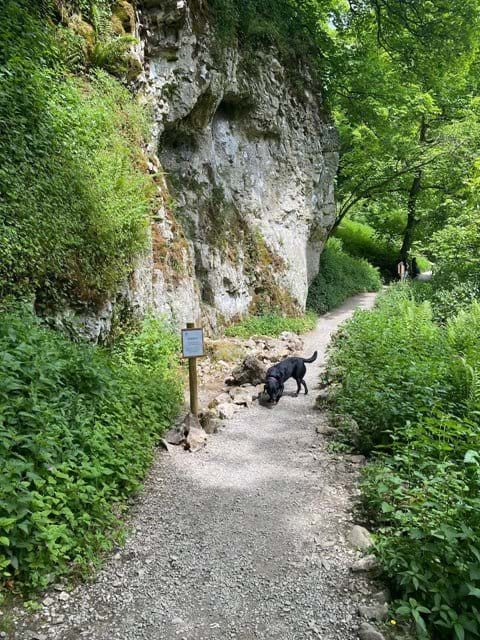 An abundance of walks - perfect holiday for your best friend