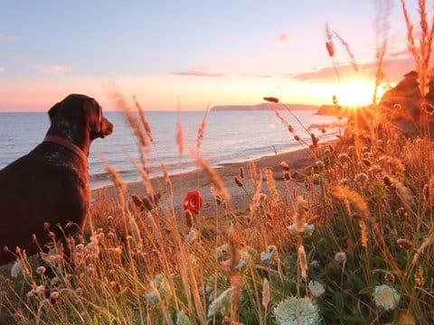 Enjoy fabulous walks with your dog