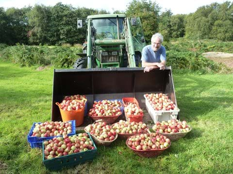 Our orchard usually produces a bumper crop of apples