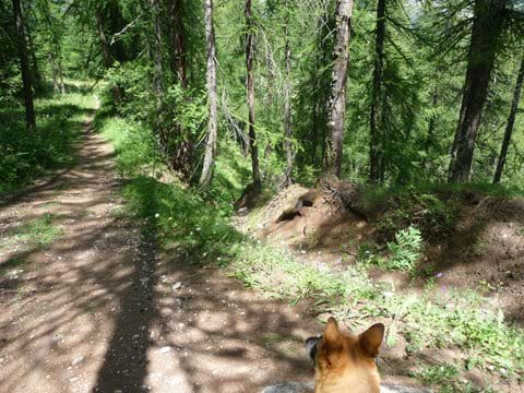 Walking in the larch forest.