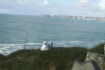 The Headland at Port Isaac, with Tintagel in the distance