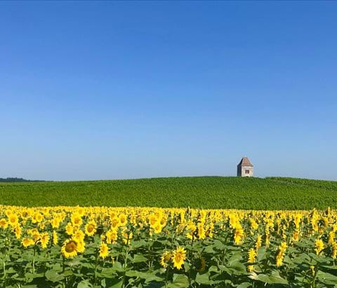 photo of sunflowers and pigeonniere