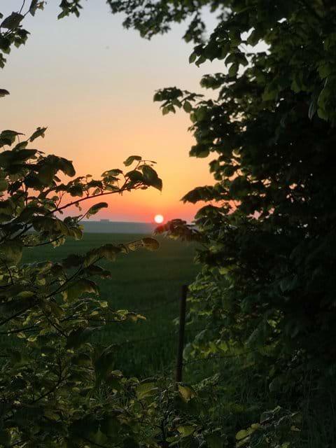 Reffy sunset