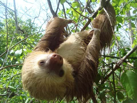 Sloth: Season from January to April
