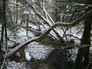 Snow on the brook