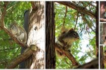 Red squirrels can be fun to watch and photograph.