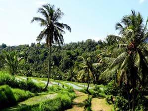 Wandeling in rijstvelden Mayong, ca 20 minuten rijden vanaf het huis