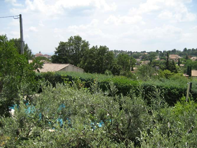 Looking through the olive trees from the terrace