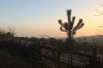 Sunset from Archallagan plantation