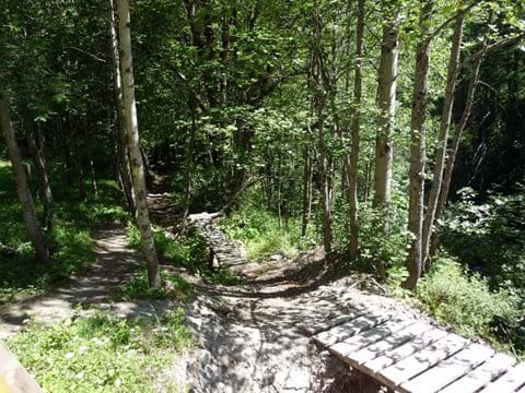 MTB trails through the larch forest