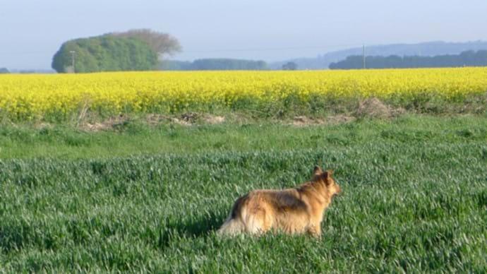 Baileydog on her favourite walk