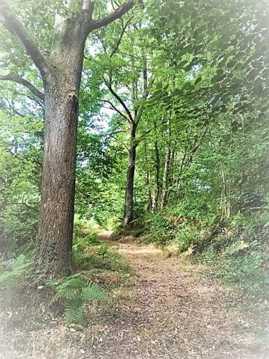 Woodland Walks on the Farm