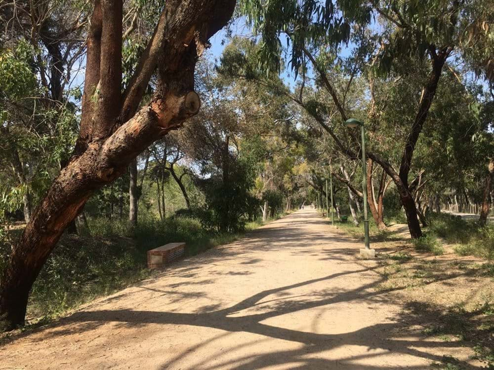 Walk through the amazing Pine Forest that sits between Guardamar