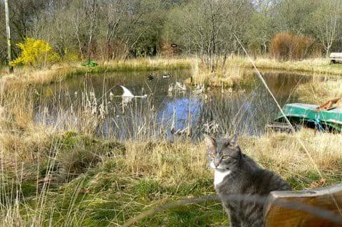 Misch by the woodland pond