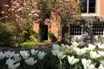 The terrace in the spring.