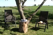 Relax under the walnut tree!
