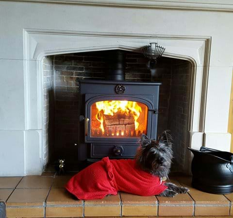 Hamish our Cairn terrier enjoying a log burning stove.