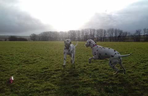 Secure dog walking field
