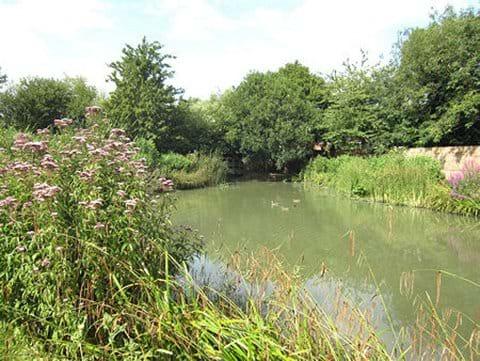 Swan Meadow Pond in August 2014