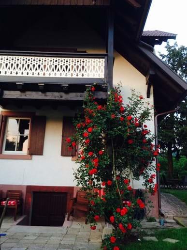 Balcony in early summer
