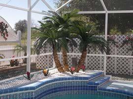 Triple palm  on the rear deck area