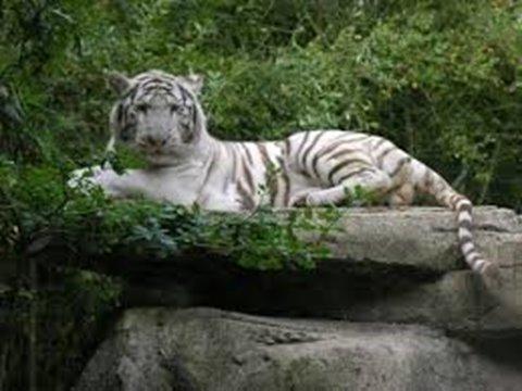 Mervent Zoo
