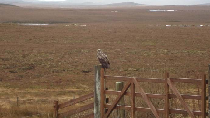 A feathered visitor!