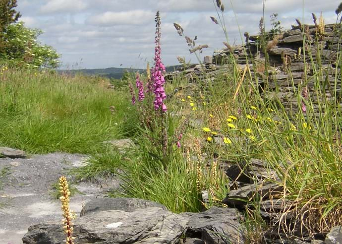 Wild flowers at Crab Cottage with the  Dunmanway mountains in the distance