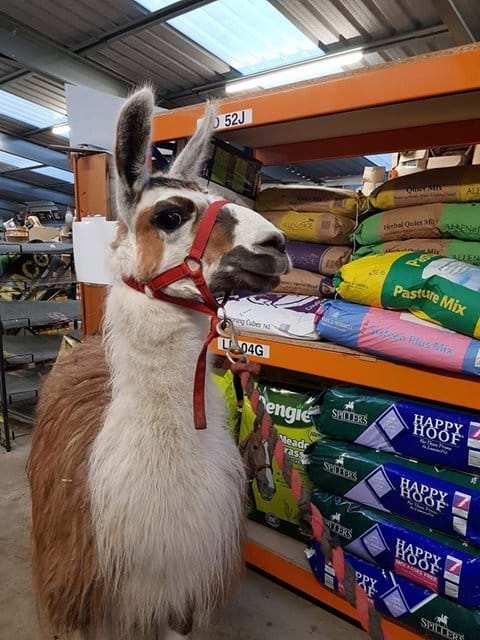 Scratby garden centre, also alpacas, donkeys and pigs to visit