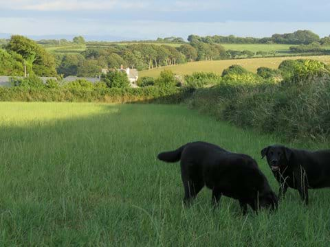Exploring the hedgerows near the cottages