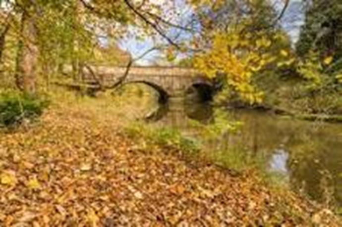 Plessey Woods Country Park - Bedlington