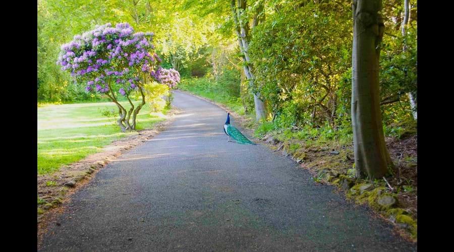Rothley Lodge - Entrance Drive