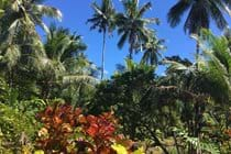 Tropical plants of many varieties & colours, with a stunning blue sky as the perfect backdrop.