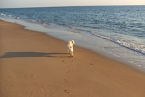 Many beaches are dog-friendly (especially out of the high season)