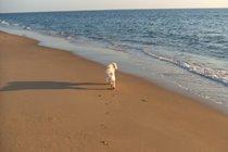 Beaucoup de plages acceptent les chiens, surtout hors saison