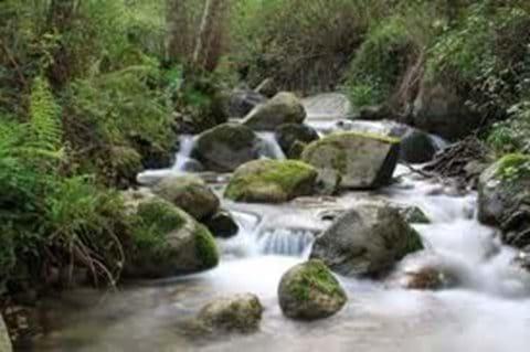 Monchique Stream
